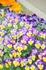 DSC_6370_20110501_147_DSC_6370.JPG