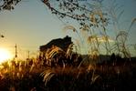 サムネイル:秋の夕暮れ