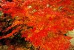 サムネイル:紅葉